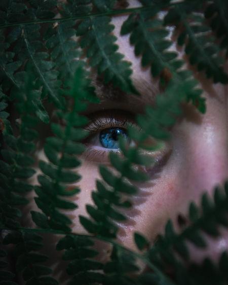 Full frame shot of human eye behind a fern