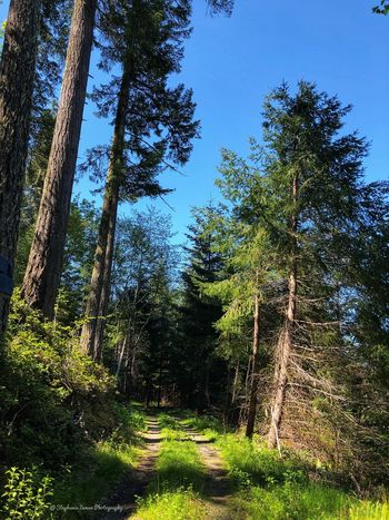 Forest Roads Plant Tree Sky Growth Nature Tranquility No People Beauty In Nature Day Land Sunlight Low Angle View Green Color Outdoors Tranquil Scene Blue Grass Scenics - Nature Clear Sky Forest