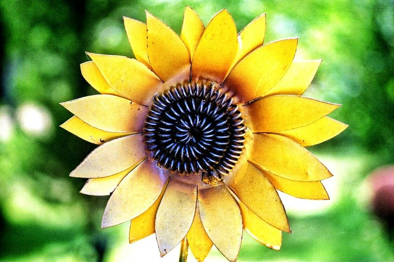 🌻🌻🌻Sunflower Sunflowers🌻 Yellow Flower Metal Metalartwork Cute First Eyeem Photo Colour Of Life