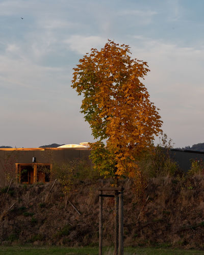 Short Time before sunset Autumn colors Detmold Airfield Architecture Around Sunset Autumn Beauty In Nature Built Structure Change Day Field Idyllic Landscpae Nature No People Outdoors Plant Scenic View Scenics - Nature Sky Tranquil Scene Tree