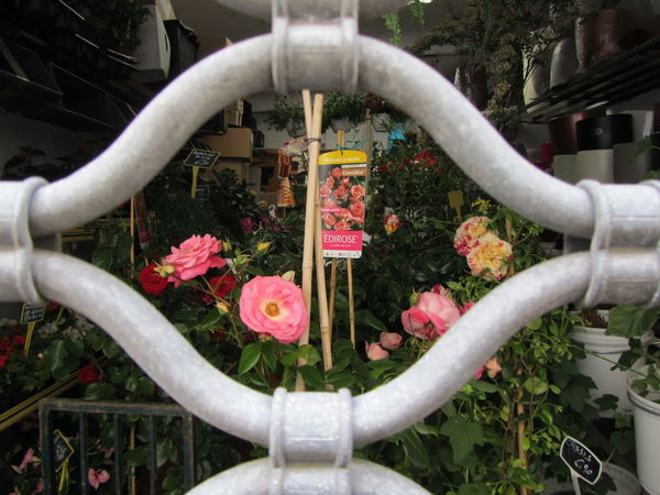 No People Tranquility Streetphotography Personal Perspective Focus On Details WeekOnEyeEm Art Is Everywhere The Street Photographer - 2017 EyeEm Awards Beauty In Nature EyeEmNewHere Colors Flowers Flowershop On The Street🌷💕 Flowershop Roses Nice France. Memories Closed Investing In Quality Of Life
