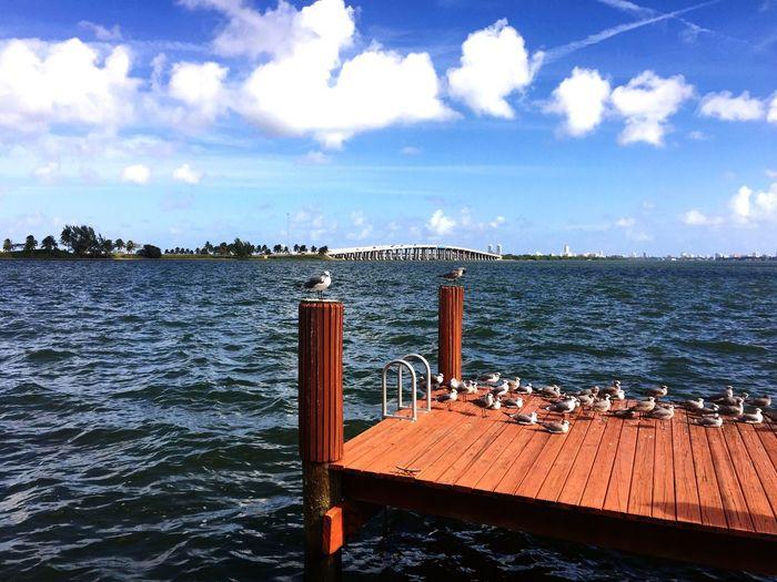 Ocean View Dock Birds First Eyeem Photo