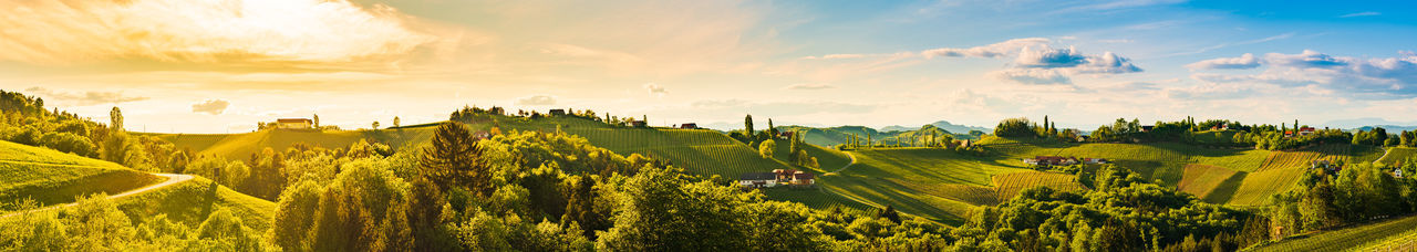 Panorama of vineyards hills in south styria, austria. tuscany like place to visit. landscape
