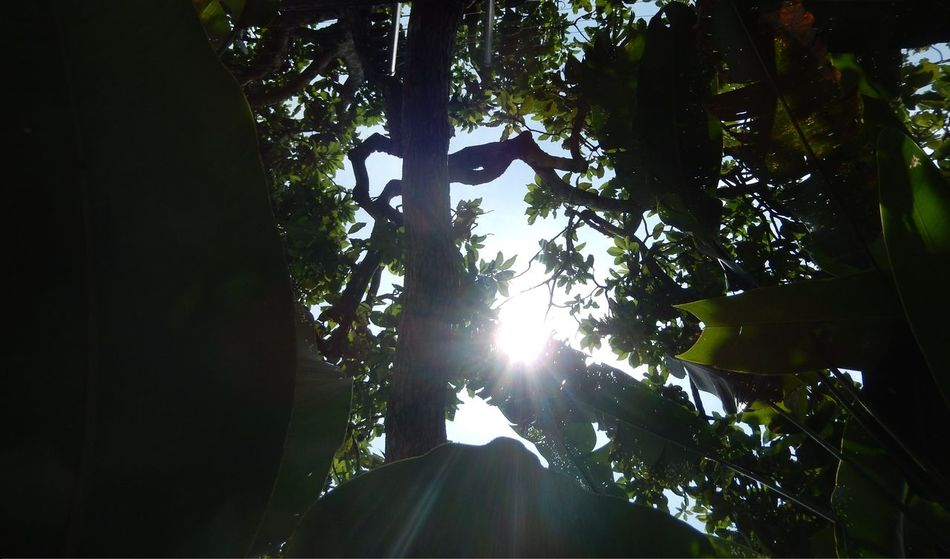 Amazona Amazonas Ecological Reserve Flowering Plant Green Color Plant Tranquility Tree Tree Trunk Trees Tropical Paradise Amazon Amazon Rainforest Beauty In Nature Botany Eco Tourism Environment Jungle Landscape Nature Rainforest Tropical Tropical Climate Tropical Flowers Tropical Plants