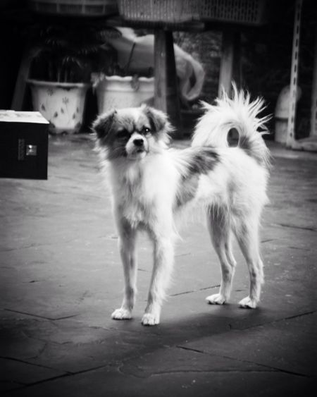 Dog 🐶 Dog