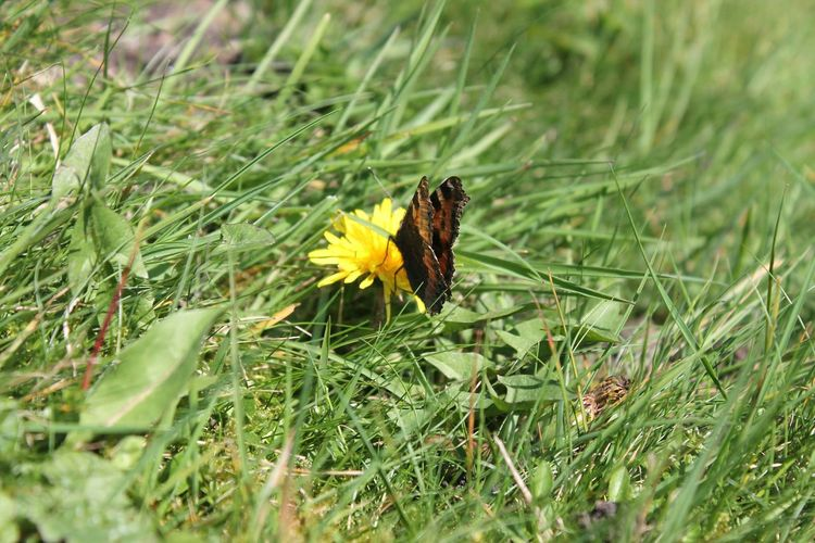 Heloo there Mr butterfly Insect Animals In The Wild One Animal Butterfly - Insect Animal Themes Nature No People Animal Wildlife Grass Outdoors Day Growth Flower Close-up Fragility Beauty In Nature Perching Freshness