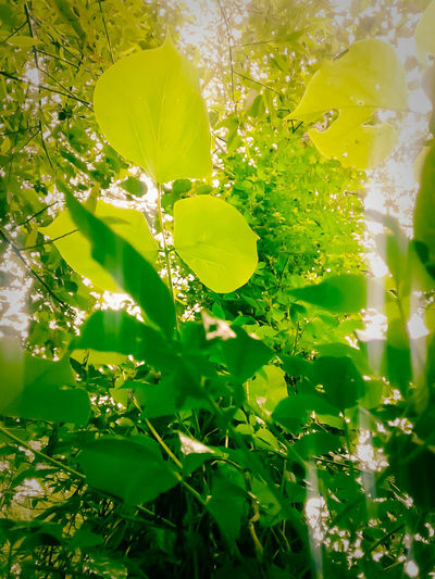 Hojas Verdes, Lluvia Gotas Gotas De Agua Arboles En Primavera Nature Photography Guatemala Belleza Natural Bellezanatural Pqseo Fotografia First Eyeem Photo Cielo Y Nubes  Atardeseres Paraiso☀🍃 Arboles Nature Grandes Arboles