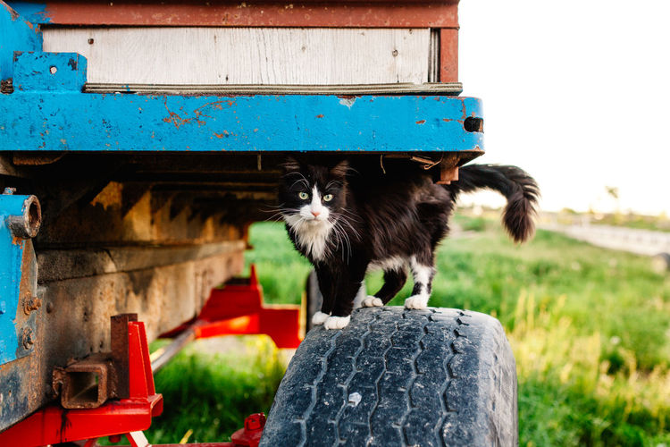 Felix Animal Themes Cat Country Life Day Domestic Animals Domestic Cat Farm Farm Cat Farm Life Mammal No People Obsolete One Animal Pets Portrait Primary Colors Primary Colours Relaxation Selective Focus Sitting Wagon  Wood Wood - Material Wooden Colour Of Life Mix Yourself A Good Time