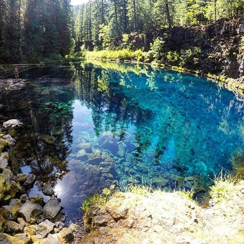 The iridescent blue pool at Tamolitch falls, along the McKenzie river trail, Willamette National Forest. Yes it really is that colour! Oregon Oregonnw Oregonexplored PNW Pacificnorthwest Lake Bluewater Blue Turquoise Iridescent  Opal Hiking Volcano Volcanic  Topography Geology Forest Golivexplore Mckenzieriver Tamolitchpool BluePool Lagoon