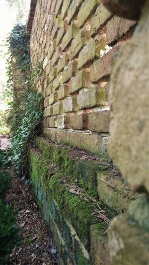 garden wall, OBX, NC Outdoors Nature Close-up Architecture Brick Brick Wall Stone Wall Wall Garden Garden Wall Outside North Carolina Stone Plants Vines Vines On Wall Moss Moss-covered Mossy EyeEm Best Shots EyeEmBestPics EyeEm Gallery EyeEmNewHere EyeEm Nature Lover EyeEm Best Shots - Nature