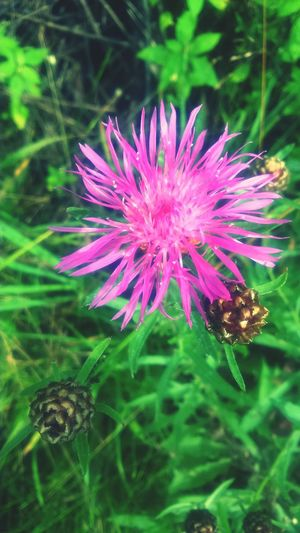 Beautiful Pink Pink Flower Flower Nature Macro Sammer 2015 Green Sammer