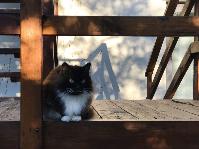 Portrait of cat sitting on wooden table