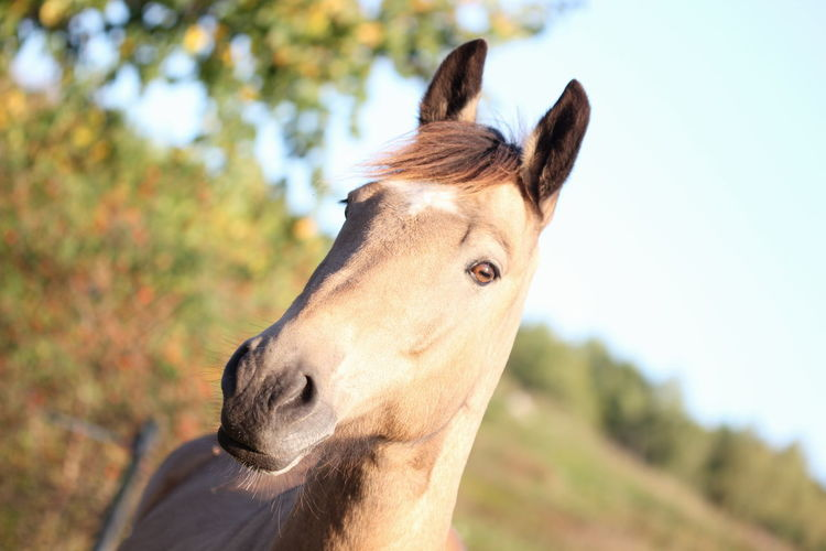 Alertness Animal Head  Animal Themes Close-up Curiosity Depth Of Field Dog Domestic Animals Focus On Foreground Friendship Front View Horse Horse Life Horse Riding Horsepower Horseriding Horses Looking At Camera Mammal One Animal Pets Portrait Relaxation Relaxing Selective Focus Zoology