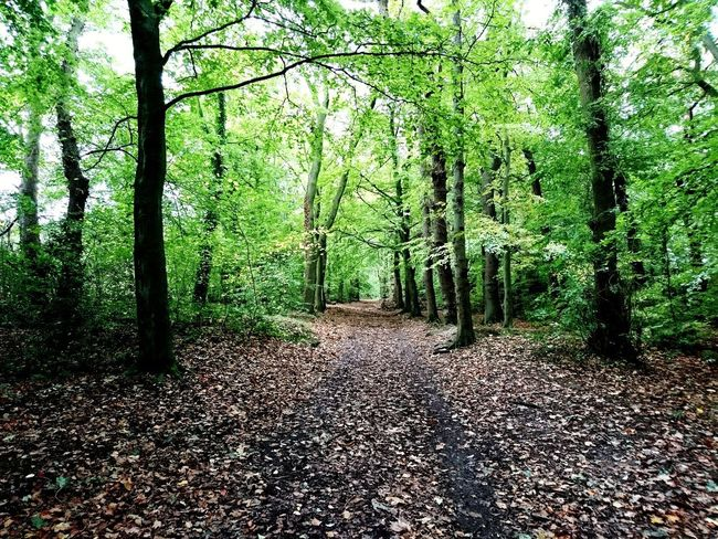 Tree Nature Forest Growth Day Outdoors Green Color The Way Forward No People Tranquility Beauty In Nature Scenics Dog Autumn Leaves Autumn Colors Autumn Arrowe Country Park Arrowe Brook Arrowe Park