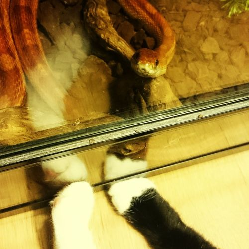 Just Another Cat Picture Snake Snake Meets Cat Sweet♡ Animals Reptile Reptilelove