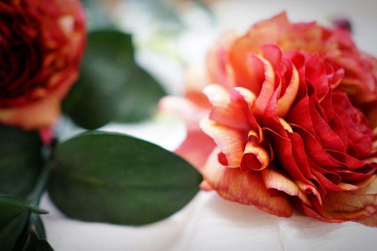 Flowerporn Flowers Flower Flower Collection EyeEm Gallery EyeEm Best Shots Ranunculus Persian Buttercup
