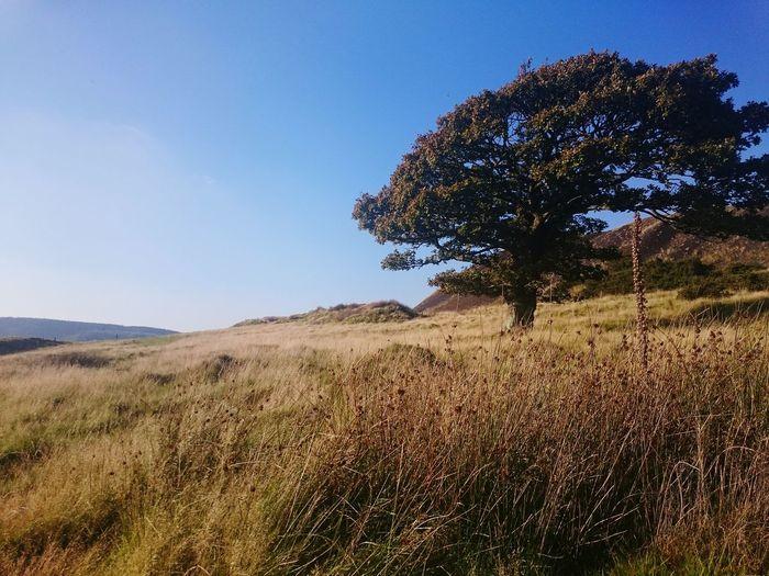 Tree Coal Tip