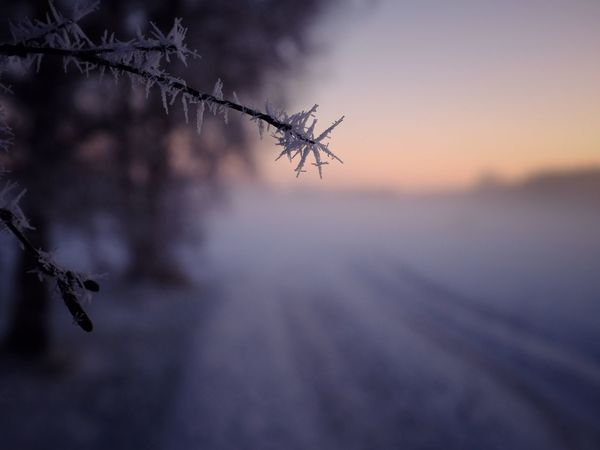 Rim Frost Fuji Closeup Winter Nature No People Outdoors Cold Temperature Snow Close-up Sunset Day Beauty In Nature Sky