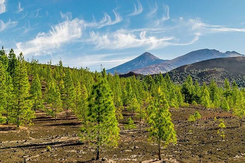 El Teide. Mountain Volcano Trees Tenerife Teide Clouds Cloudchaser Cloudscape Cloudporn Landscape Landscapelovers Landscape_lovers Landscape_captures Landscapephotography Awesome_earthpix Awesome_shots Awesomeearth Global_hotshotz Destinationearth Earthfocus Nofilter Photooftheday Resourcemag Warrenjc Natureglobepix naturelovers