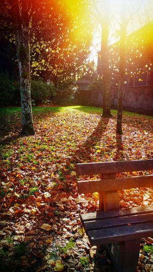 Sunlight falling on bench in park during autumn