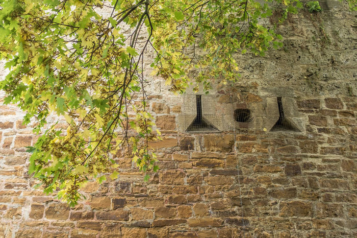 Architecture Autumn Building Exterior Built Structure City Wall Day Growth Nature No People Outdoors Renaissance Castle Southern Germany Tree