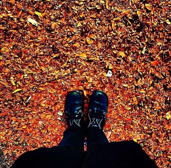 Passed Autumn Filmcamera Hello World