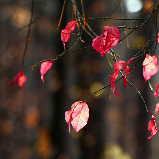 Fall Fall Colors Bokeh Bokehlicious Bokeh Photography Macro Macro_collection Macroclique Macro Photography Beautiful
