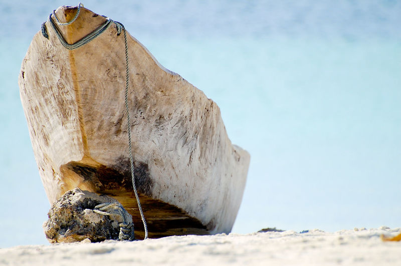 Close-up of horse on the beach