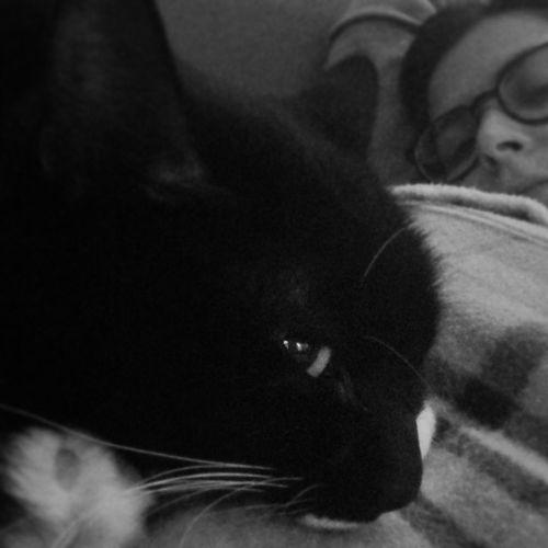 Cat Sofanight RelaxingAtHome Mondaynight Love Comemiamitunonmiamanessuno