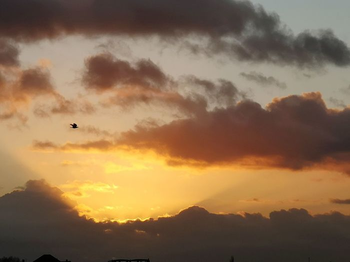 Silhouette of birds flying in sky during sunset