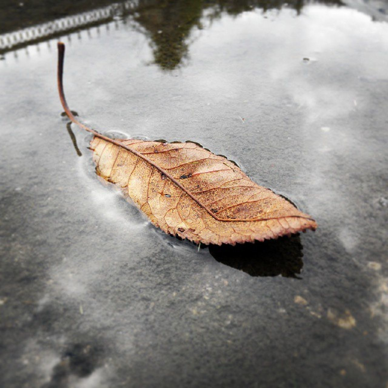 leaf, outdoors, day, high angle view, nature, close-up, one animal, no people, animals in the wild, animal themes, water