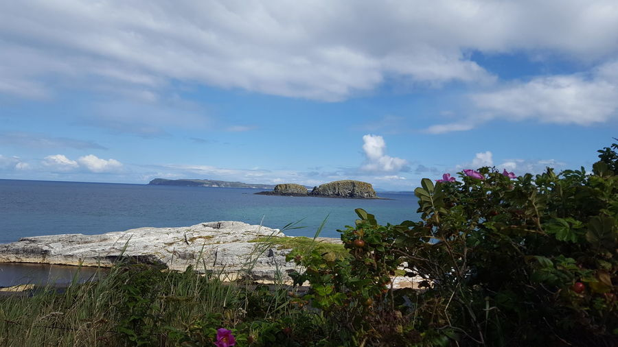 No People Beauty In Nature Ireland Northern Ireland Ballintoy Flower Water Sea Beach Sky Horizon Over Water Cloud - Sky Landscape Calm Blooming Coastline Coast Seascape Coastal Feature