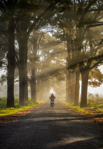 Woman riding motorcycle on road amidst trees