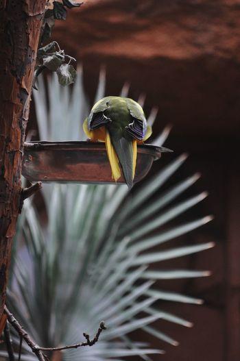 Free cage Bird Water Parrot Close-up Tropical Bird Animal Wing