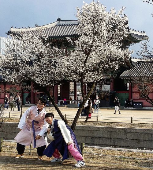I wonder if these tourists were korean - they were hilarious! Streetphotography Seoulstreetphotography Kr_streetphotography Gyeongbokgung Palace, Seoul 1392 -1897 Joseon Dynasty Cherry Blossoms Spring Seoul Spring Seoul South Korea Seoulspring2017