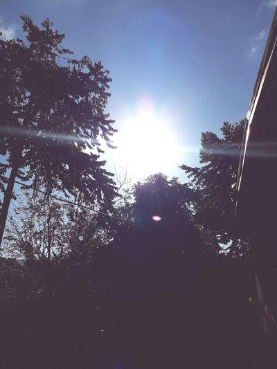 Morning Sun Beaming Through Tree Sky EyeEmNewHere