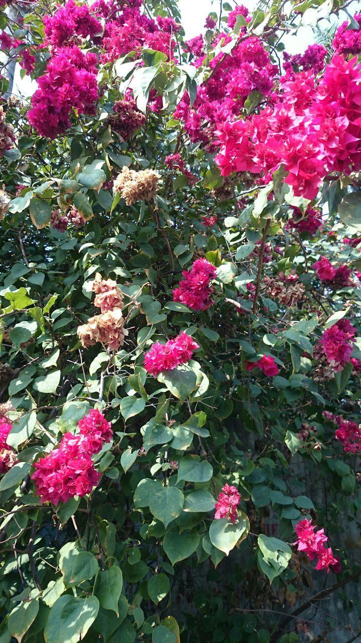 Pink Flowers Blooming In Park