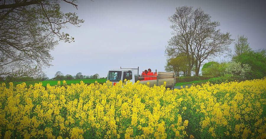 Lunch stop Gas Propane Gas Cylinder Lorry Iveco Flogas Calor Avanti Roadside Flower Rural Scene Yellow Agriculture Tree Field Crop  Oilseed Rape Sky Farmland Cultivated Land Mustard Plant Cultivated Agricultural Field Plant Life In Bloom Blooming Farm Tractor Patchwork Landscape Barbed Wire