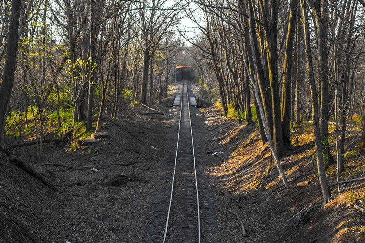 The Train Tracks running through the forest. The sht was taken at The Norristown Farm Park. Beauty In Nature Darkness And Light Day Forest Howard Roberts Light And Shadow Movement Nature Nature Nature Photography Naturelovers Naturephotography No People Outdoors Path Forward Railroad Track Rails Railway Shadow And Light Tranquility Transportation Tree Tree Tree_collection  TreePorn