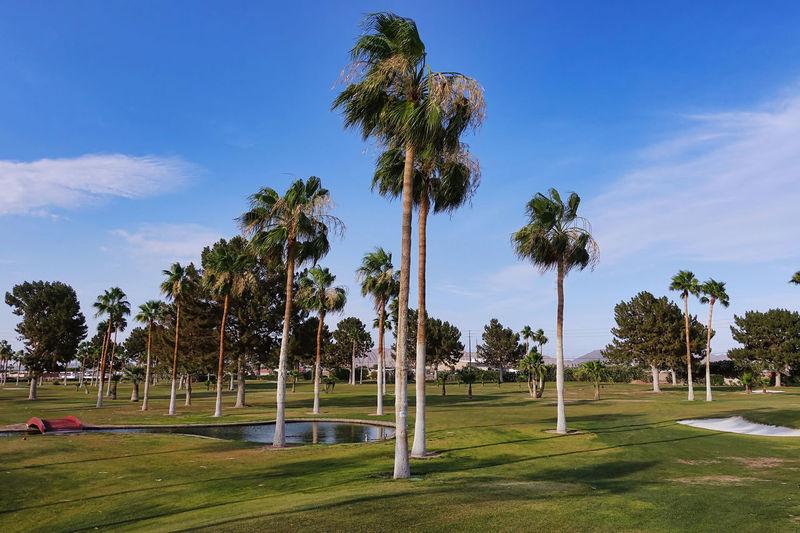 In a golf