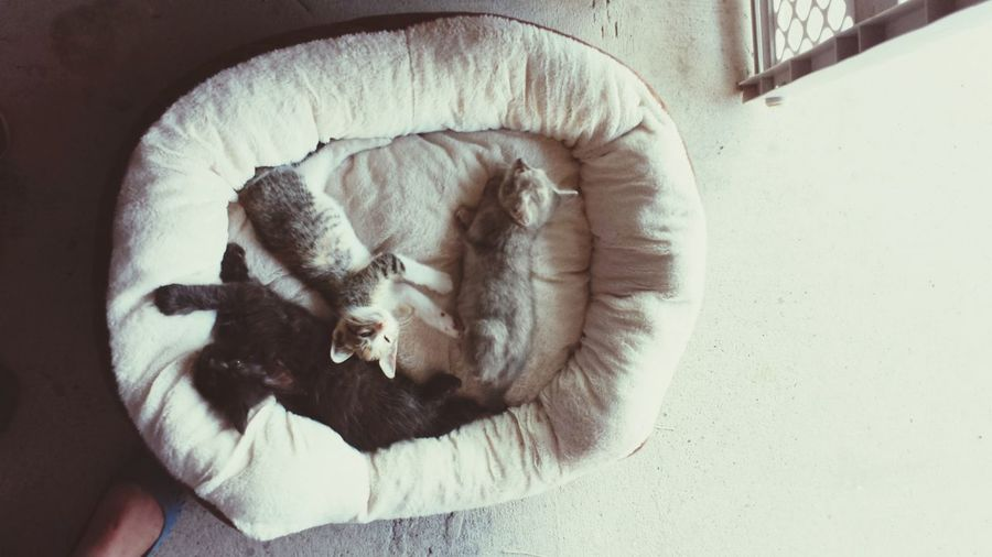 Sleepy Kittys Kittens BedTime :) My Cute Kittens  They love sleeping during the day❤❤😊