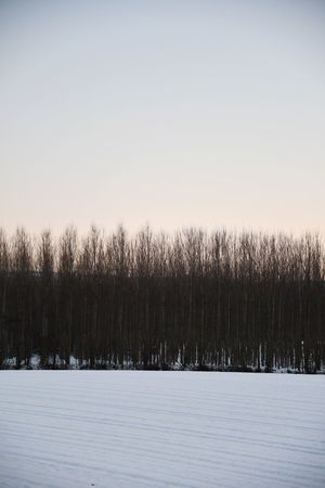 Rows Of Trees Snowscape Snowy Field Langhe Winter Tranquility Rural Scene Outdoor Snow Winter Cold Temperature Nature Frozen No People Tree Outdoors Beauty In Nature Sky Sunset Landscape Scenics