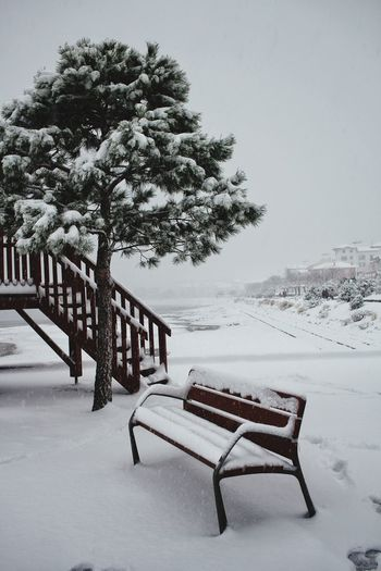 Tree Snow Cold Temperature Winter Photograph Seat Chair Absence Sky Landscape