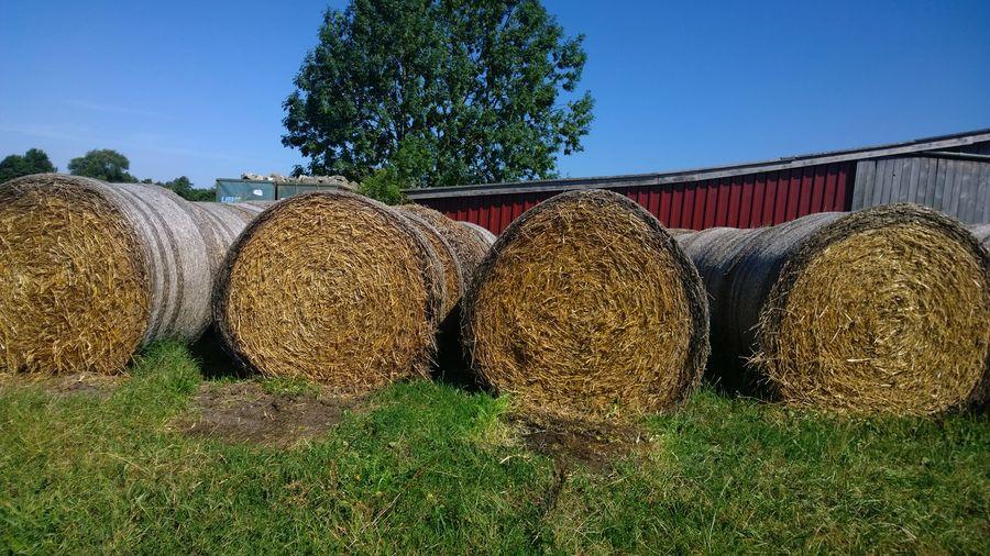 Hay bales by barn on field against sky