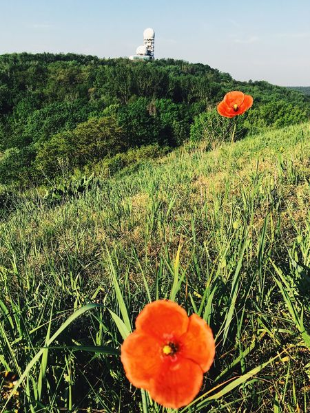 EyEmNewHere Growth Field Flower Nature Plant Grass Poppy Beauty In Nature Freshness Day Outdoors Landscape No People Flower Head Tranquility Petal Rural Scene Green Color Agriculture Uncultivated Teufelsberg Berlin NSA Station Berlin