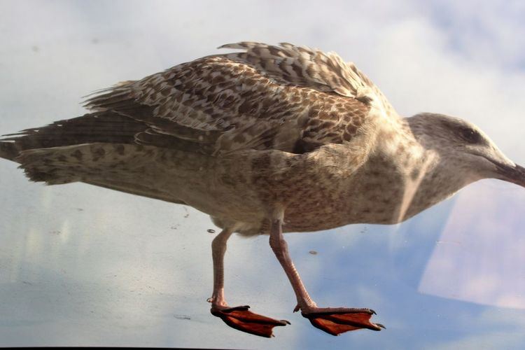 Bird Cloud - Sky Animal Wildlife Animal Themes One Animal Outdoors No People Animals In The Wild Day Nature Sky Close-up Water Seagull