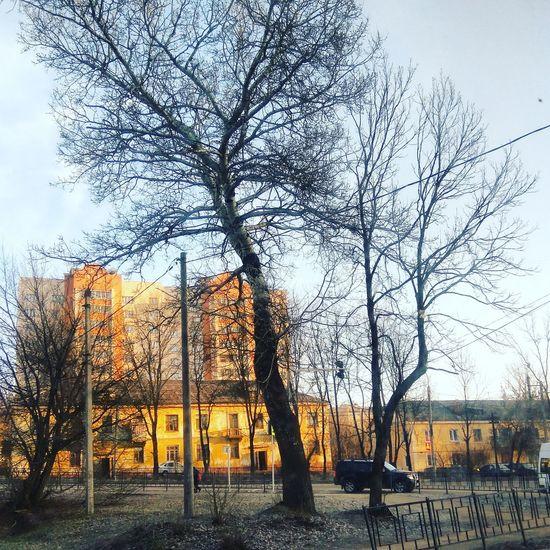 Tree Sky No People City Built Structure Outdoors Building Exterior Architecture Nature Day City Life IMography Architecture Весна💐🌷🌿 весна пришла солнечныйдень солнечно город городской пейзаж смоленск смоленскаяобласть Россия