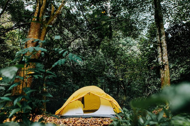 Tent against trees in forest