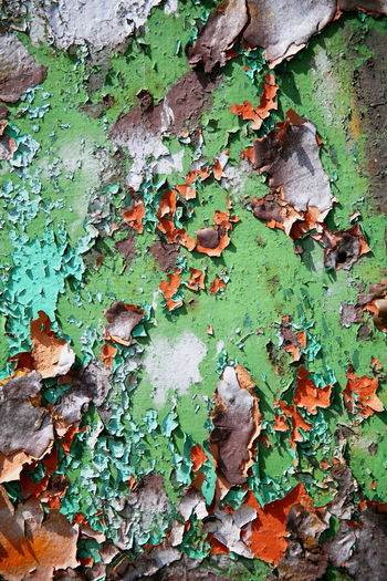 Full frame shot of ivy on old weathered wall