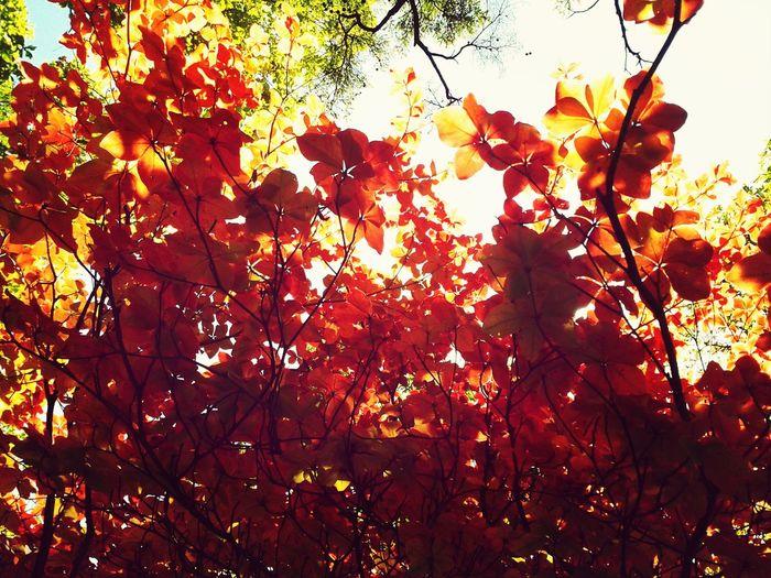 Autumcolours Autumn Leafs